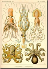 Tafel_054_medium_Ernst_Haeckel_Kunstformen%20-der%20-Natur_Art_forms_in_nature_recapitulation_radiolaria_evolution_creationism