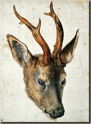 albert head of a roe deer, pen, ink and watercolour, durer